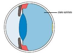 CialoSzkliste-1